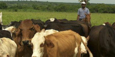 Brasil retornará a exportar carne bovina para China