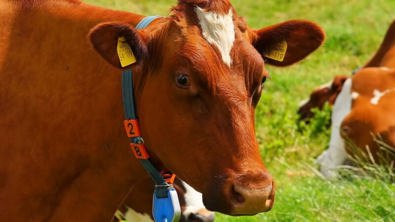 Vaca louca faz Arábia Saudita suspender importações de carne bovina do Brasil