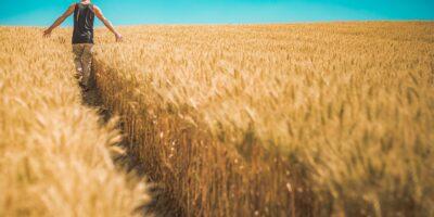 Produção agrícola em 2020 bate novo recorde e atinge R$470,5 bilhões