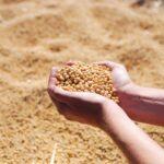 Agronegócio teve alta de 21% em setembro, com recorde em exportações